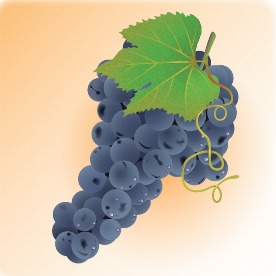 grapes Illustrator Tutorials and Resources